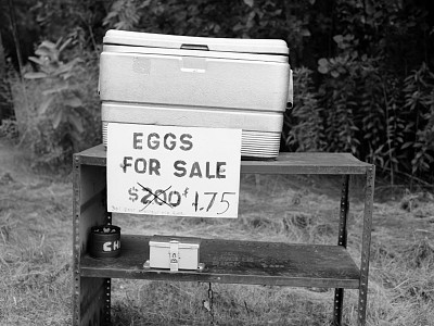 07 Montague Eggs for Sale
